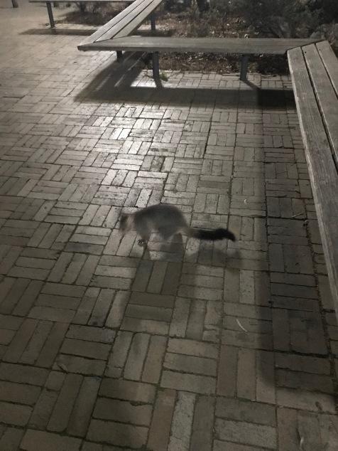 En possum, tydligen är dessa Melbournes variant av ekorrar