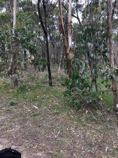 "Här är ""where's waldo"" kengurubild. Troddede sku va på denna bild, men aina ei voi voittaa :( (sori addo)"