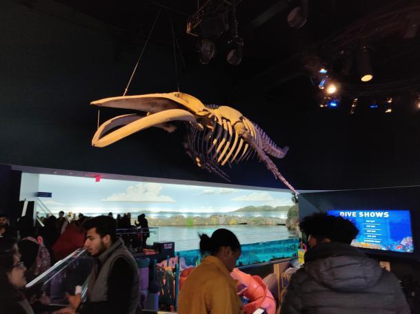 Fanns även lite mindre levande fiskar på akvariet