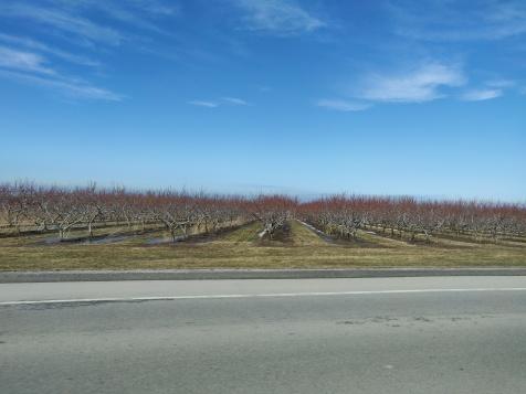 vingårdarna var ännu på vinterpaus.